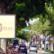 Las Olas Restaurants